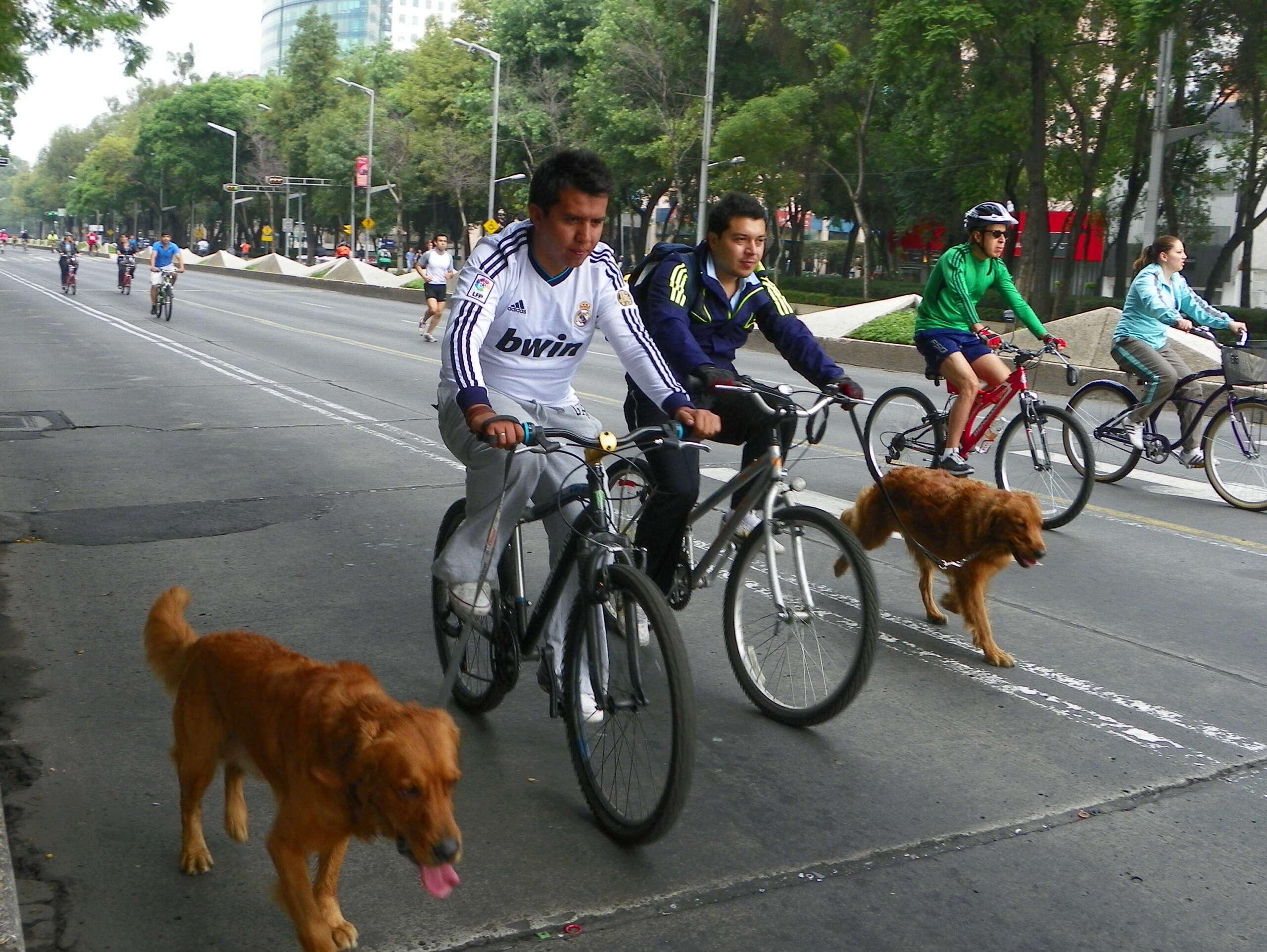 perro en bici