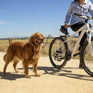 dog cycle leash